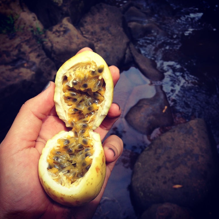 passion fruit while hiking