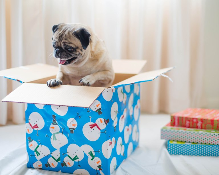 happy almost holidays! pugs & kisses!