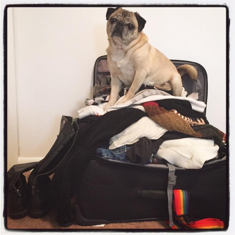 Miyagi helped me pack!